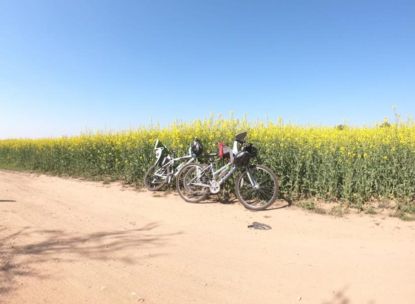bikes in front on rapeseed field on marriotts way
